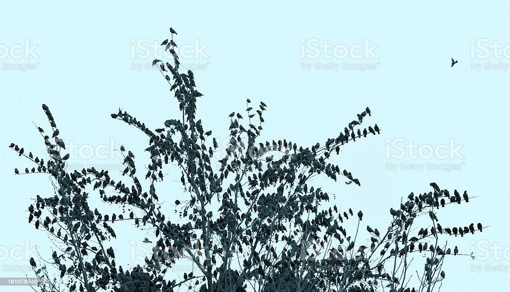 Birds and tree royalty-free stock photo