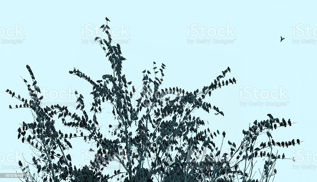 Birds and tree stock photo