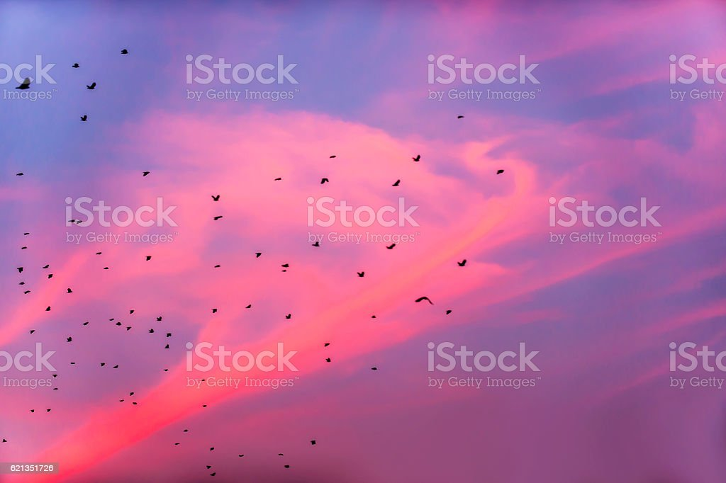 Birds are flying in the sunset stock photo