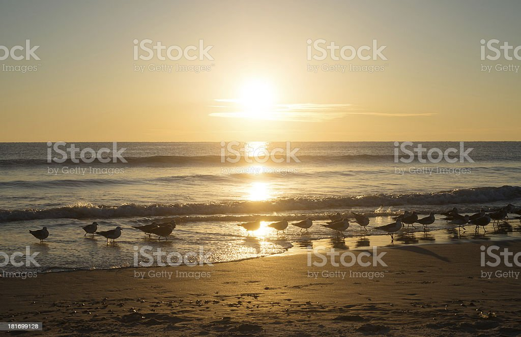 Birds at Sunrise in Florida stock photo