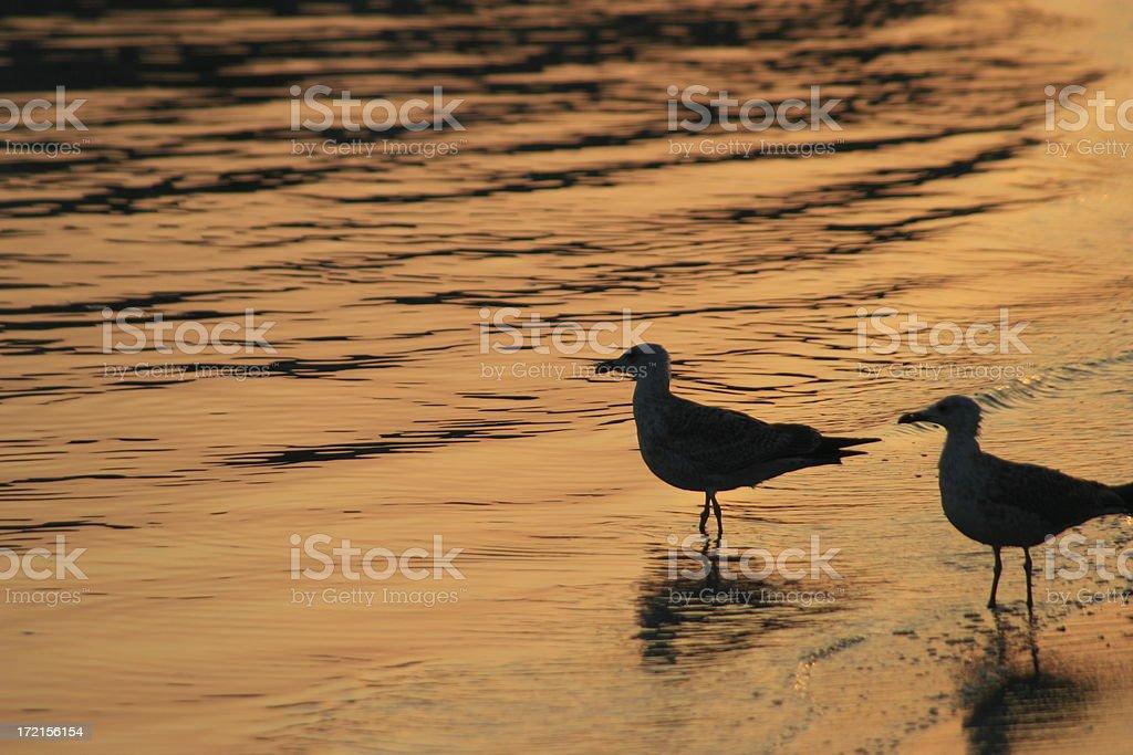 Birds at Sunset stock photo