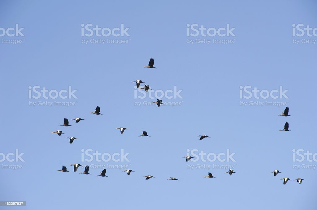 Birds at the lake of Suchitlan stock photo