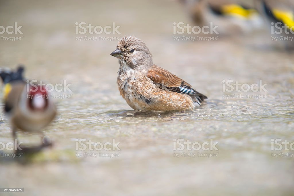 Birds bathing in river stock photo