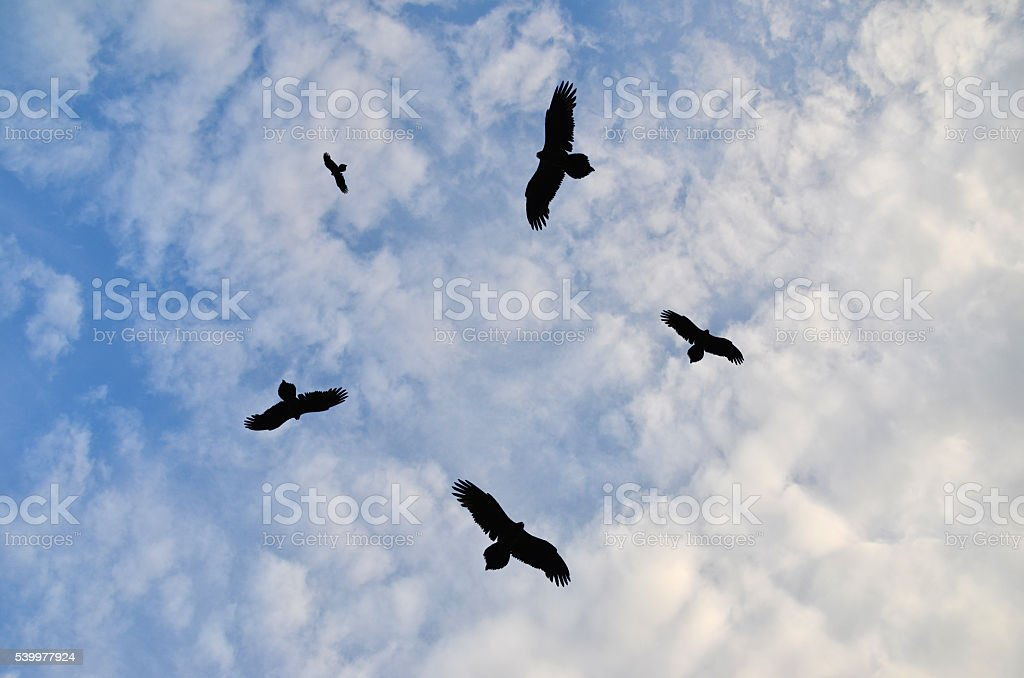 Birds circling in the sky stock photo
