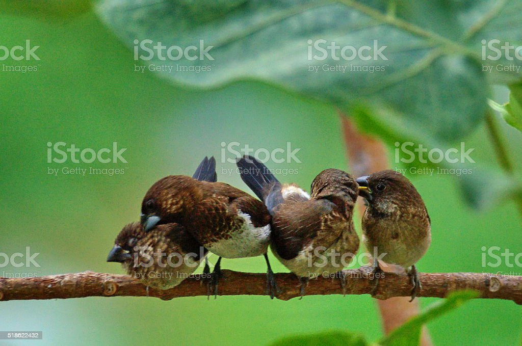 birds cleaning and relax. stock photo