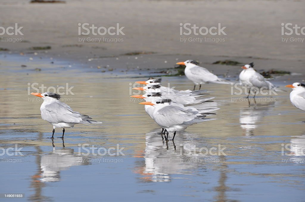 Birds displaying cooperation and leadership royalty-free stock photo