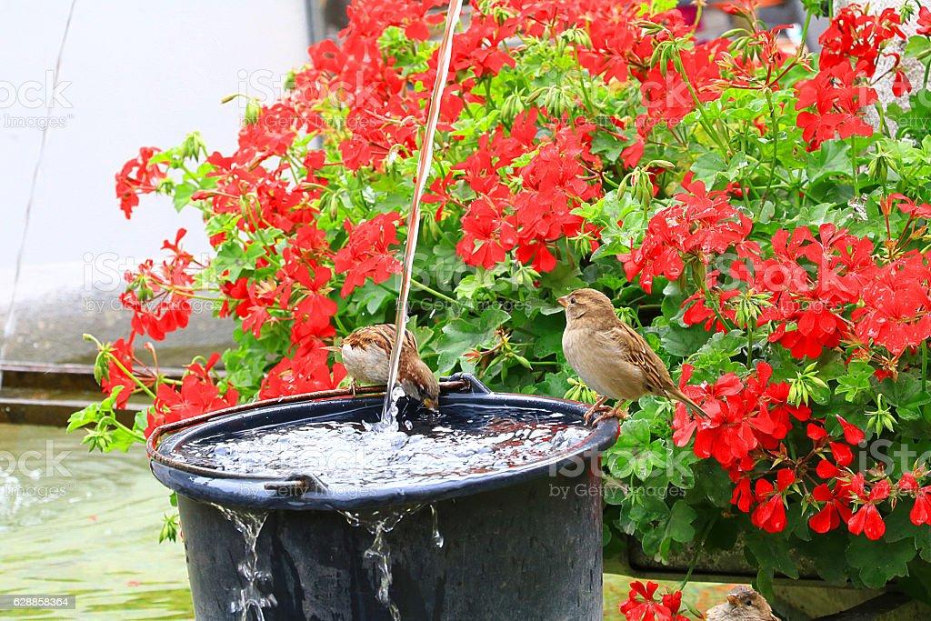 Birds Drinking stock photo