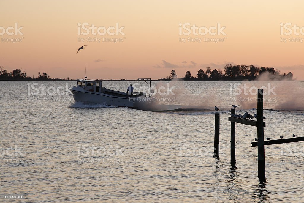 Birds Escort Fishing Boat As Sun Comes Up. royalty-free stock photo