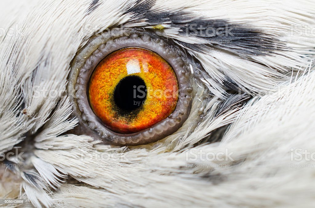bird's eye close-up stock photo