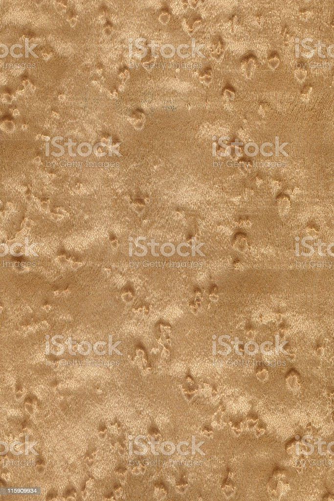 bird's eye maple wood, Acer saccharinum royalty-free stock photo