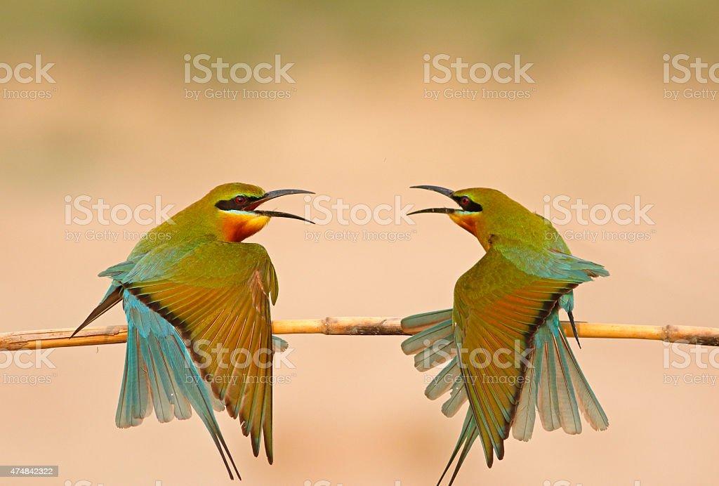 Birds Fashion Show stock photo