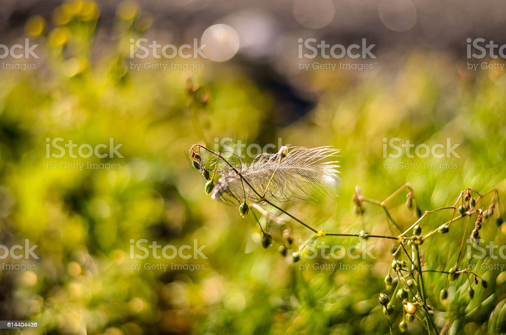 birds feather hanging on autumn plant stock photo