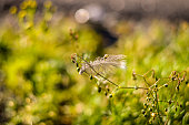 birds feather hanging on autumn plant