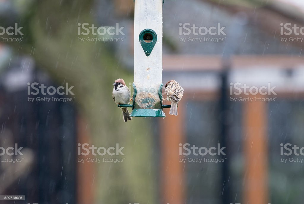 Birds Feeding stock photo