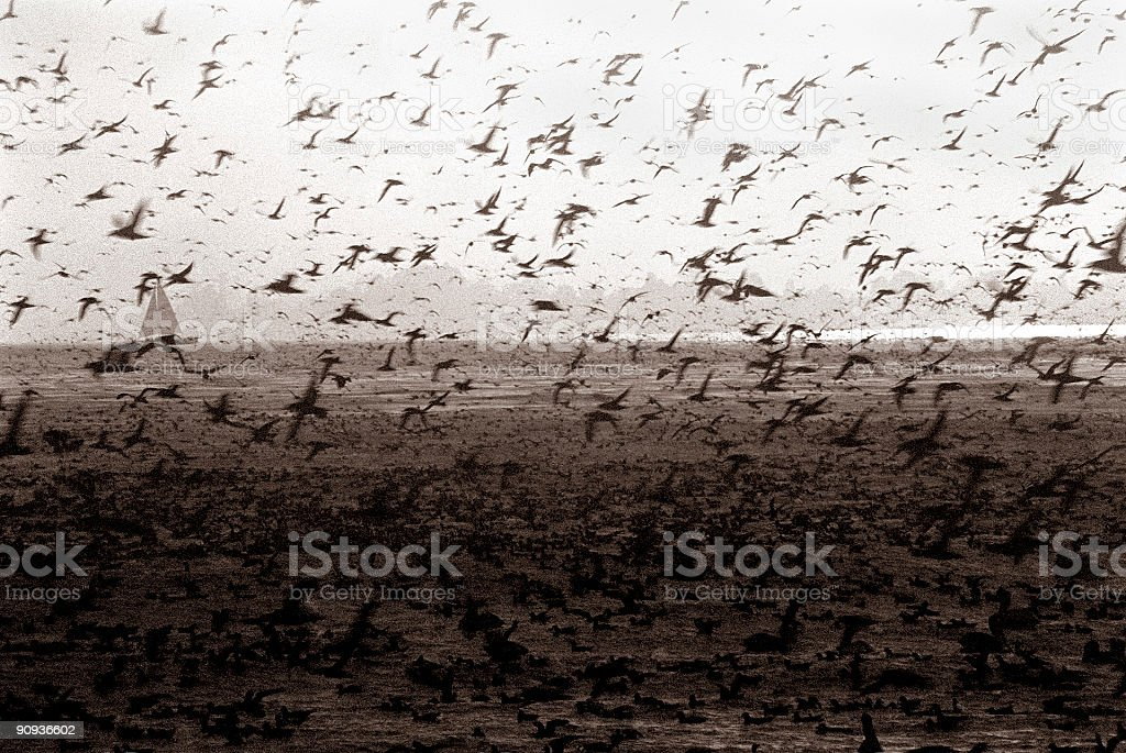 Birds flocking together stock photo