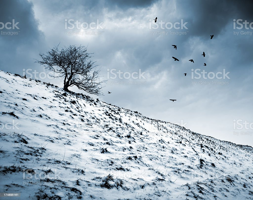Birds fly around silhouette of tree on hill in winter. stock photo