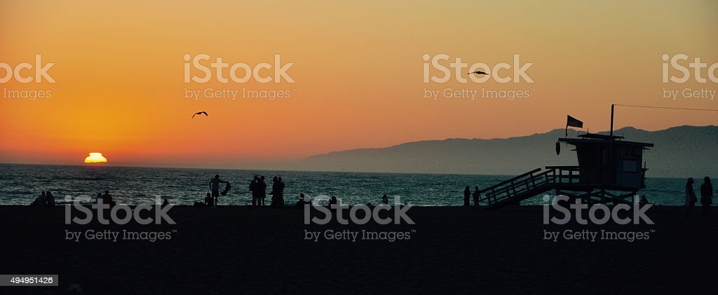 birds fly at sunset stock photo