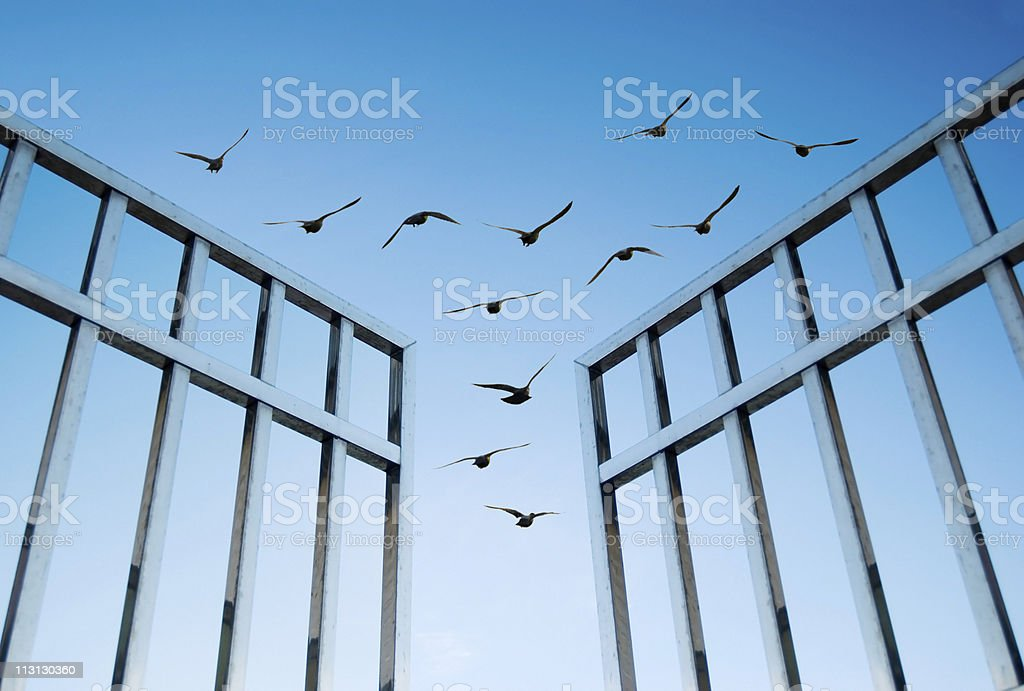 birds fly over the open gate royalty-free stock photo