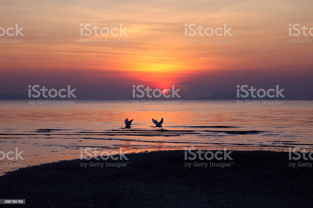 Birds fly with sunset background. stock photo