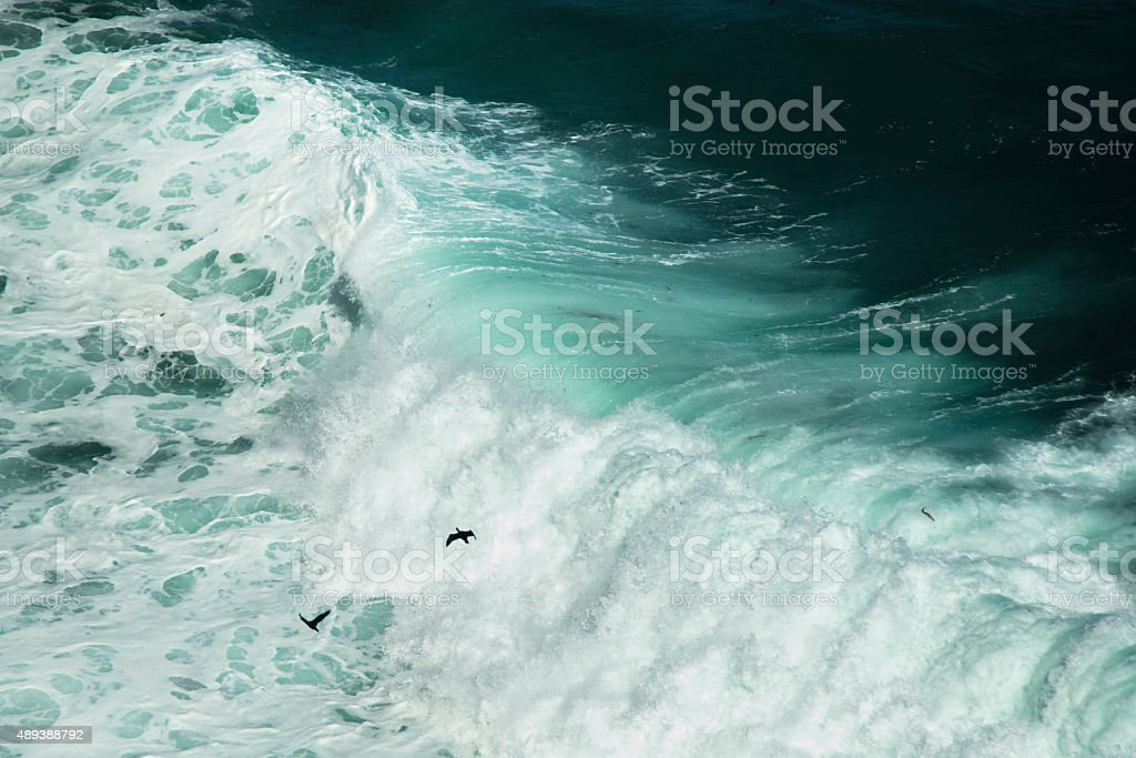 Birds flying above huge waves stock photo