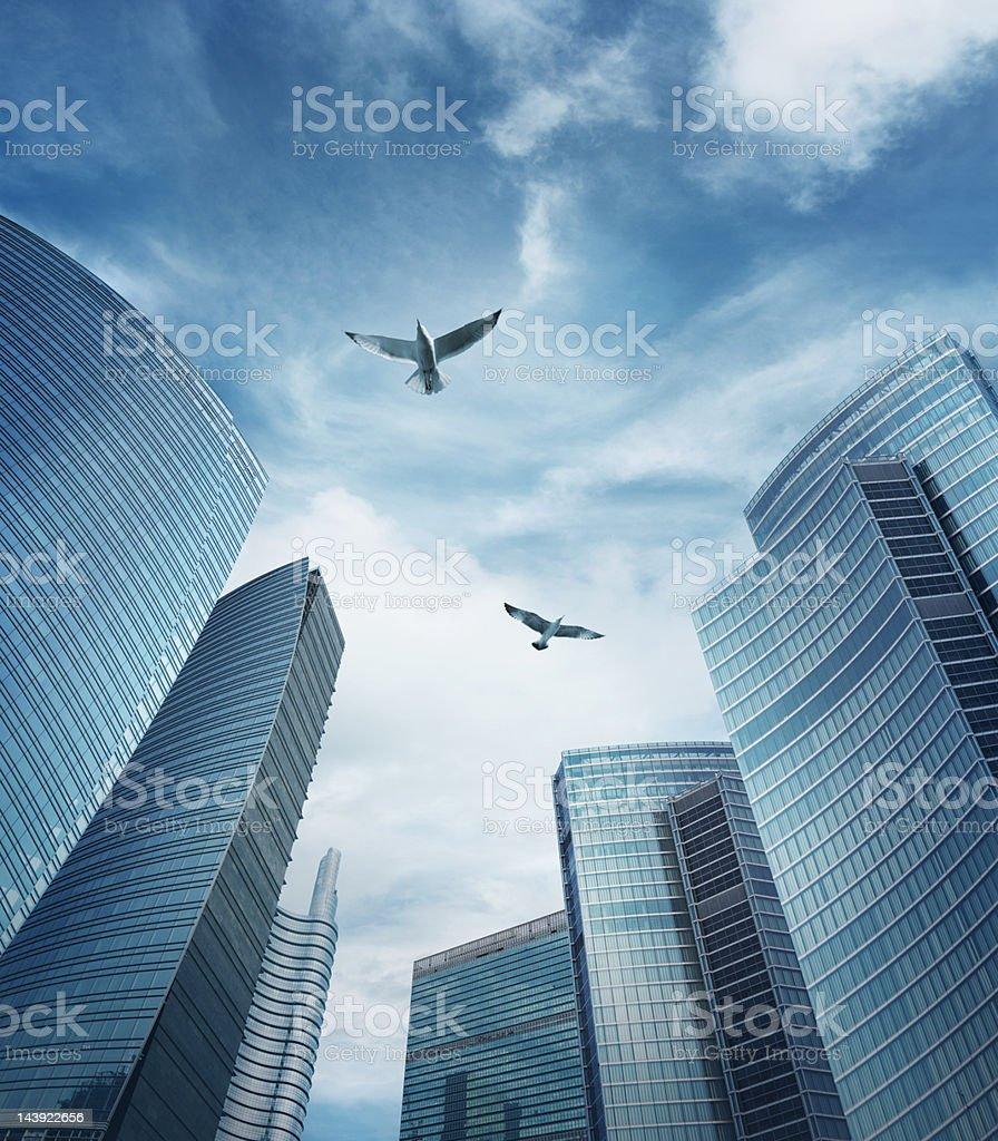 Birds flying among skyscrapers stock photo