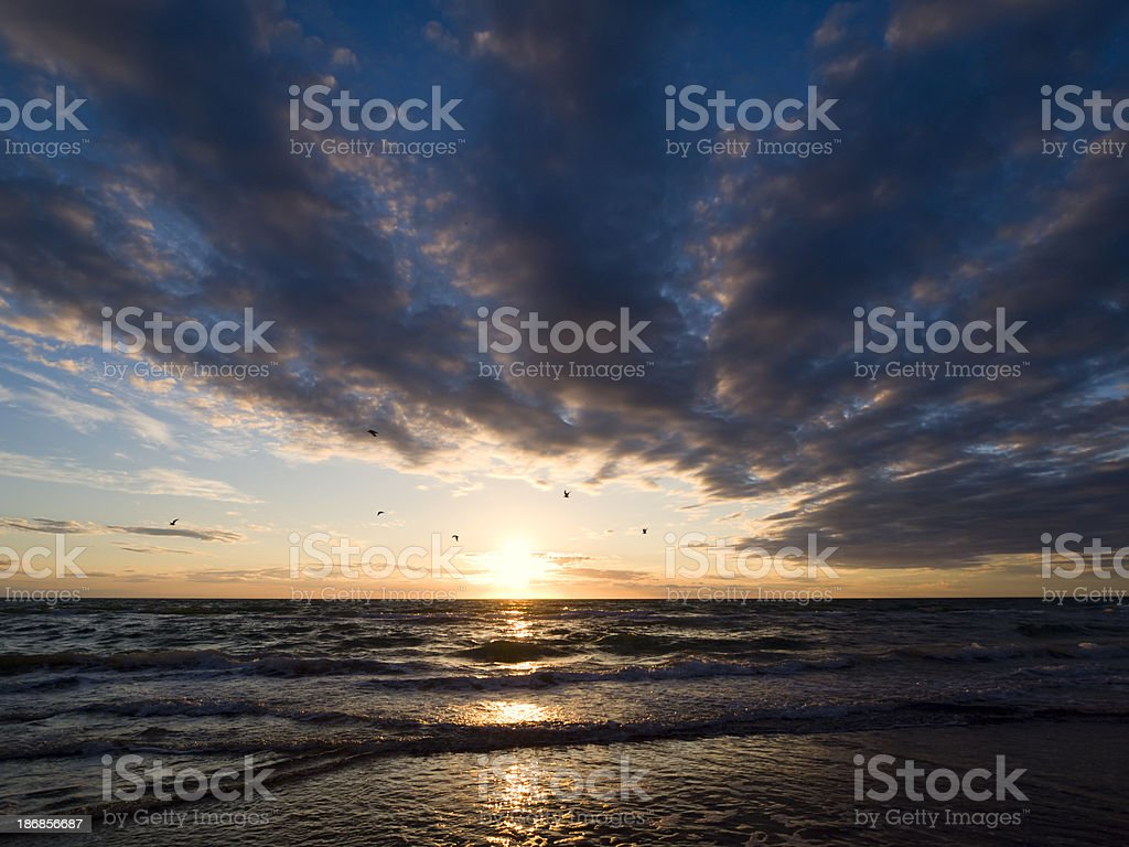Birds flying by at sunset stock photo