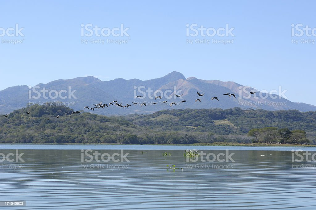 Birds Flying in Formation over Suchitlan lake, El Salvador royalty-free stock photo