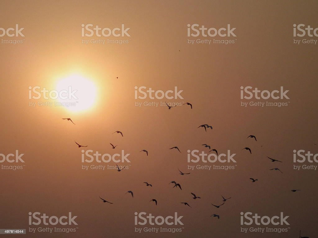 Birds flying in front of setting sun stock photo