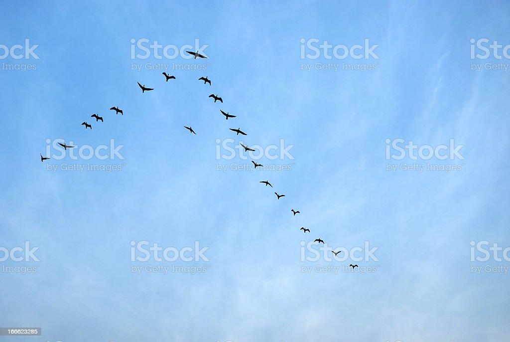 Birds flying in Sauraha, Nepal royalty-free stock photo
