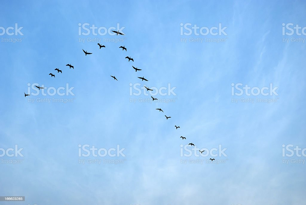 Birds flying in Sauraha, Nepal stock photo