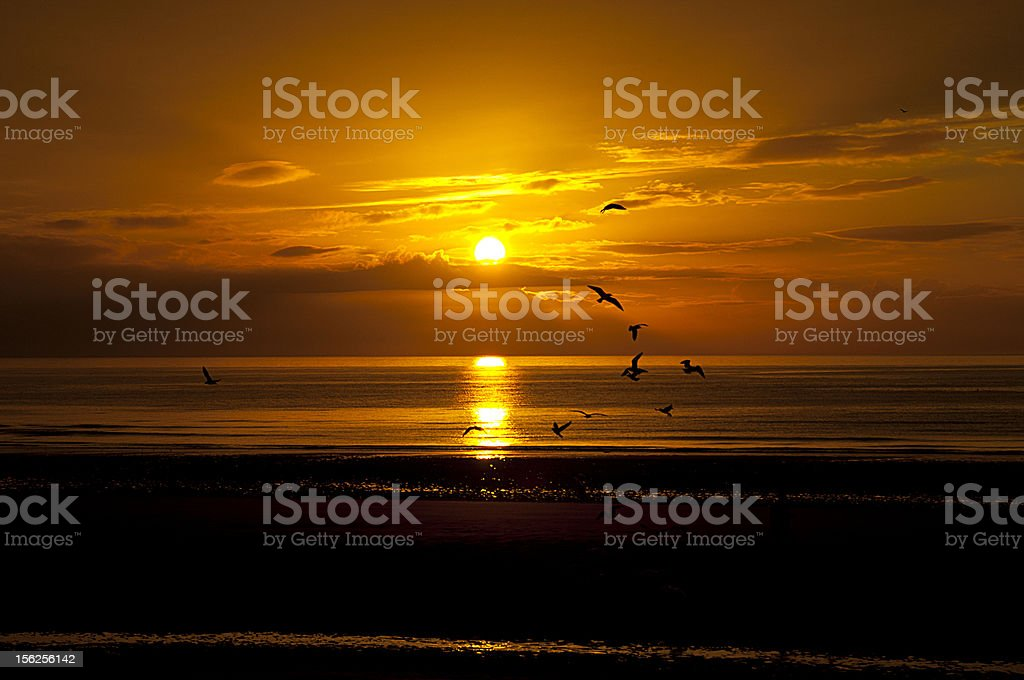 birds flying in the sunset royalty-free stock photo