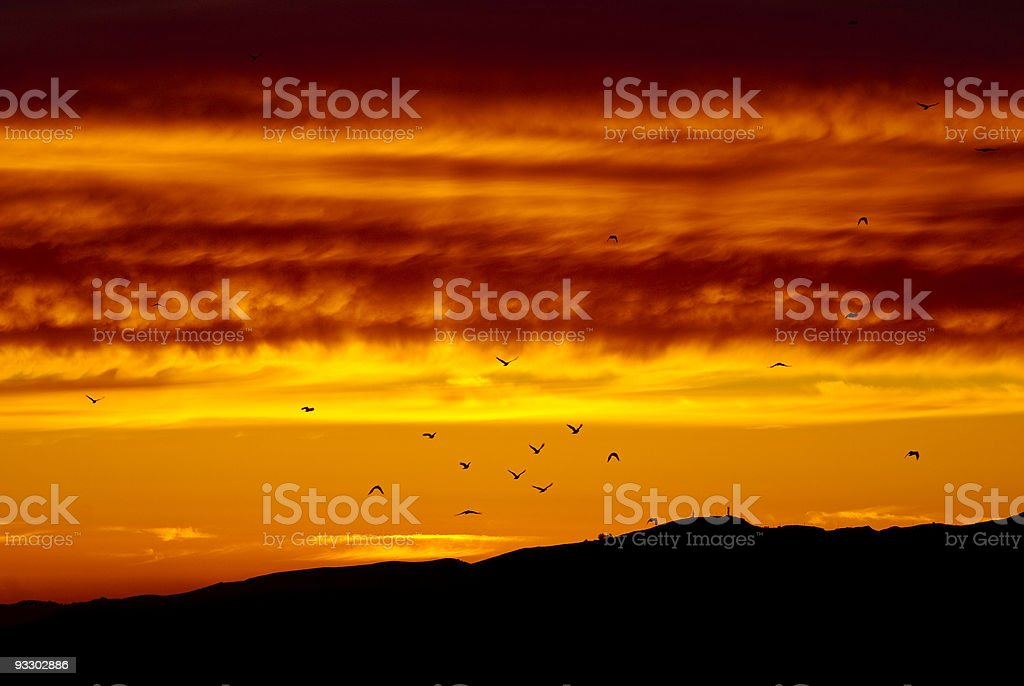 Birds flying into the sunset royalty-free stock photo