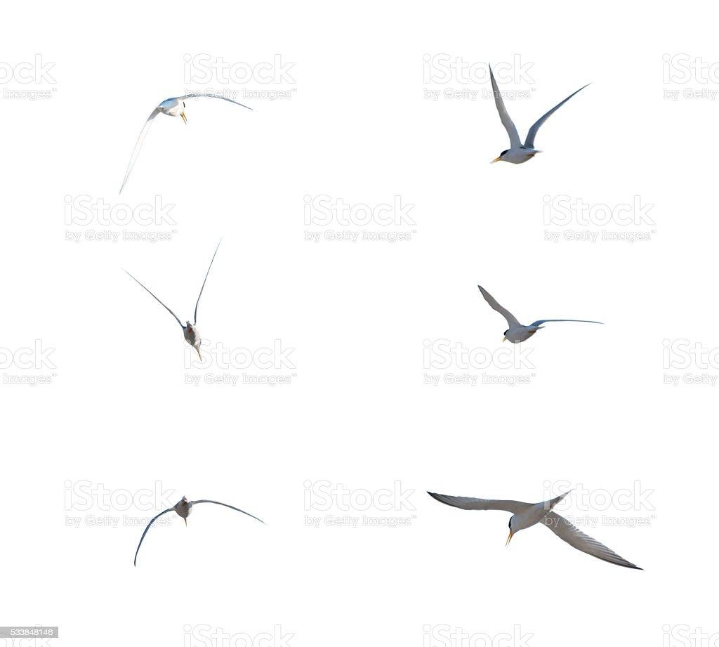 Birds flying isolate on white background. Birds isolate. stock photo