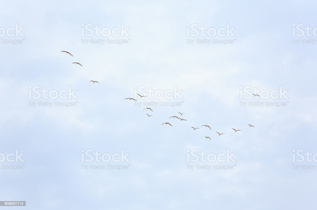 birds flying on bluesky background stock photo