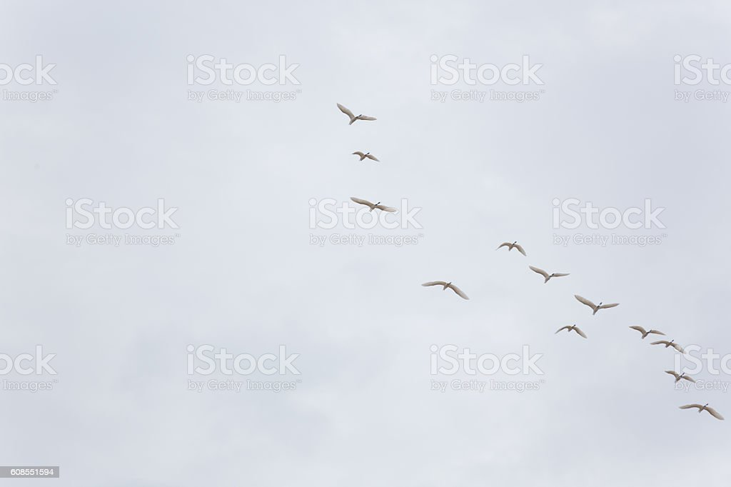 birds flying on white sky background stock photo