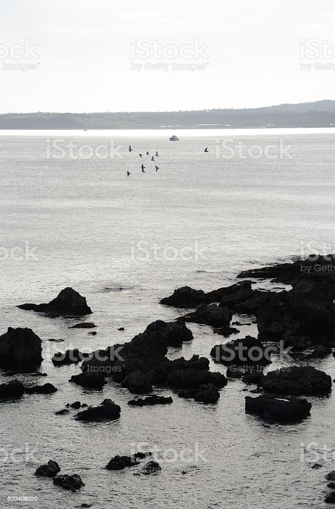Birds flying over South China sea at Kenting, Taiwan stock photo