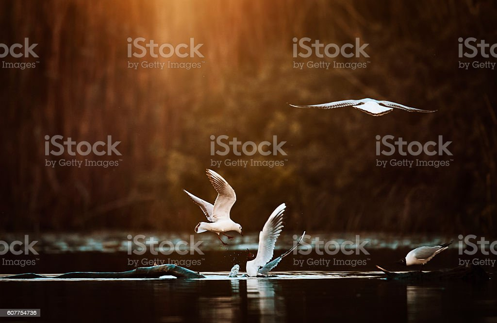 birds flying over the water stock photo
