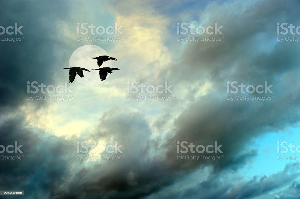 Birds Flying stock photo