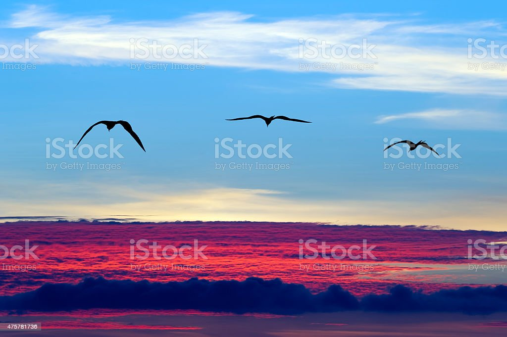 Birds Flying Silhouette stock photo