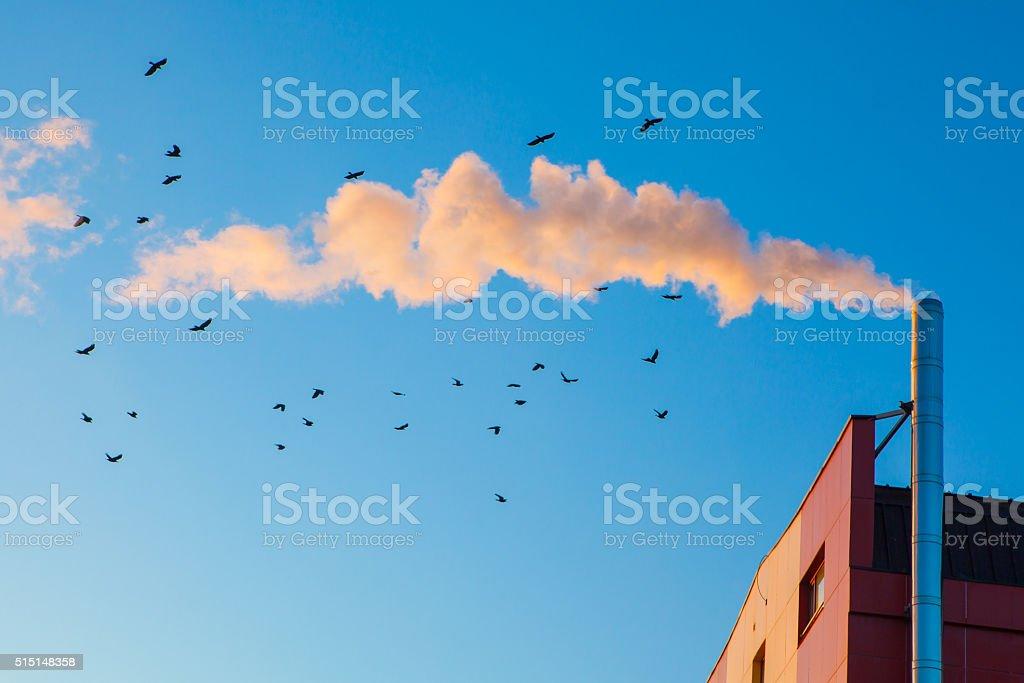 birds flying through smoke stock photo