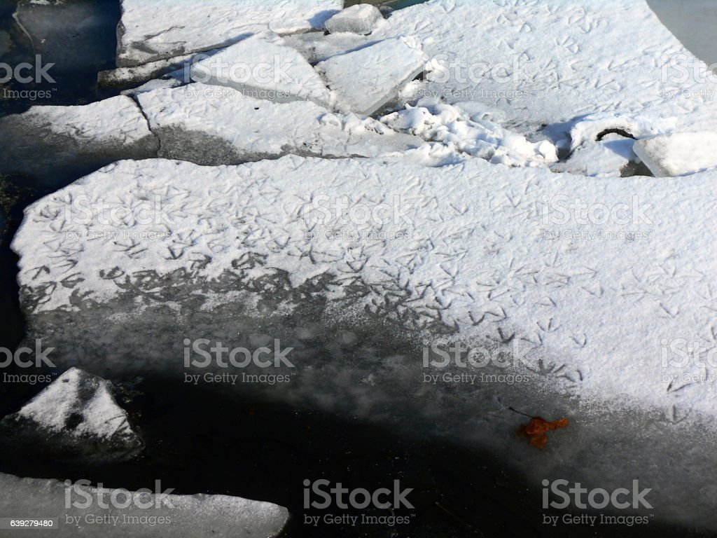 birds footprints in the snow on the block of ice stock photo