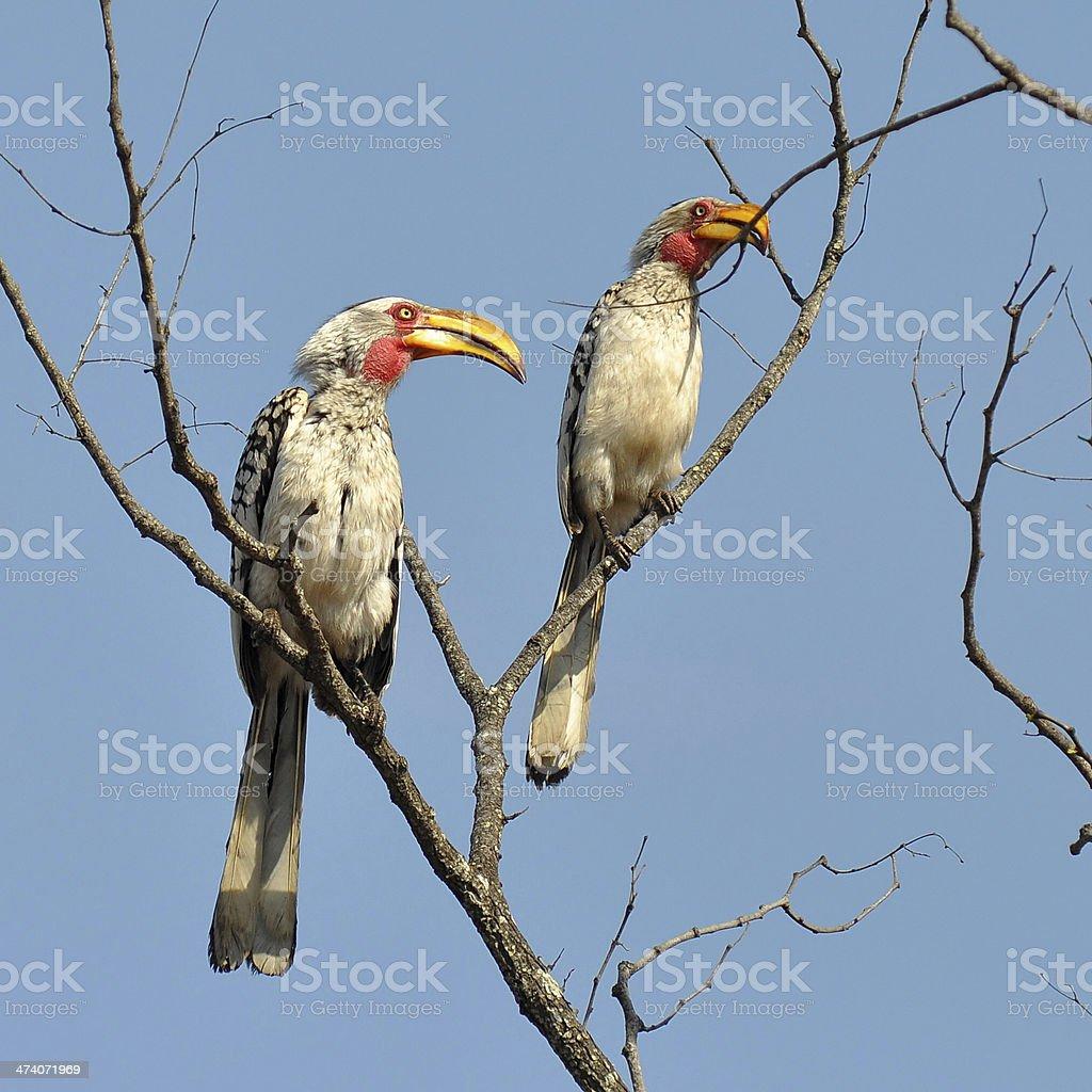 birds hornbil stock photo