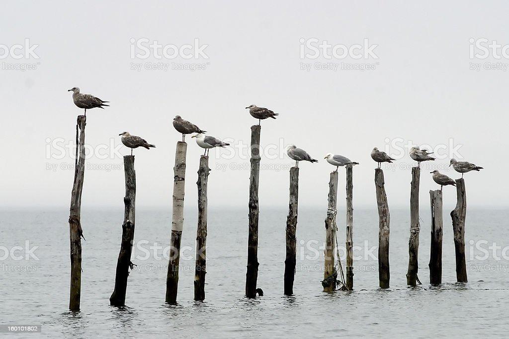 Birds In A Row royalty-free stock photo