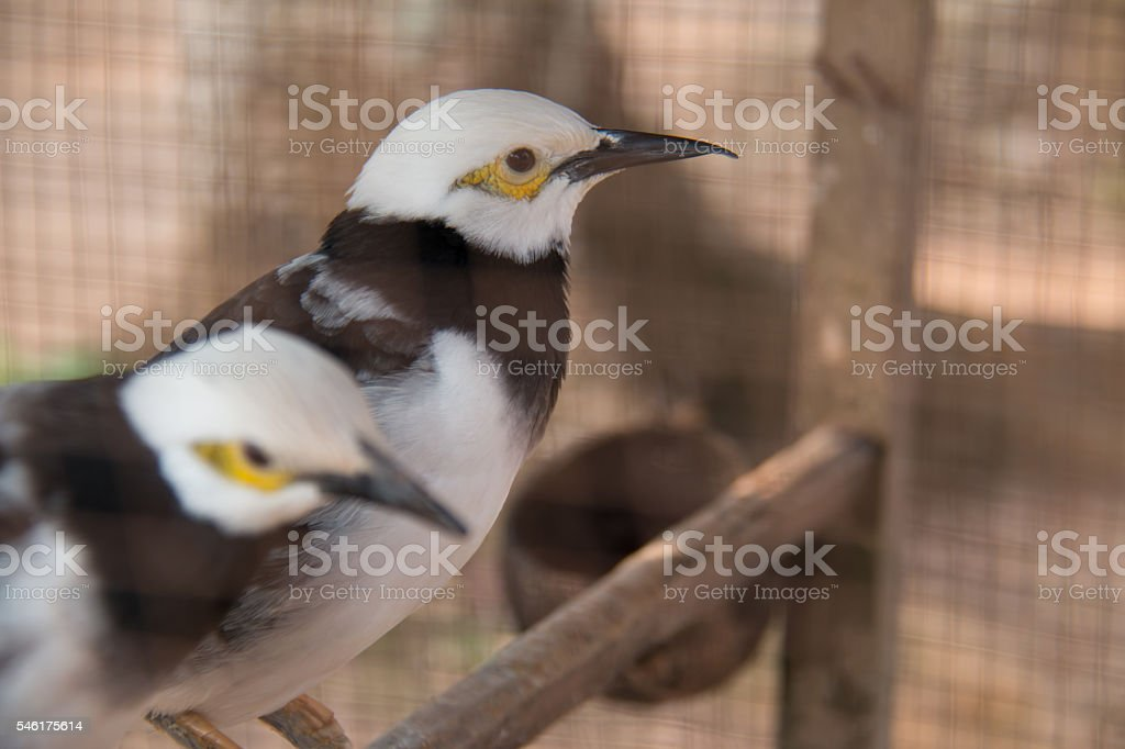 Birds in cage. stock photo
