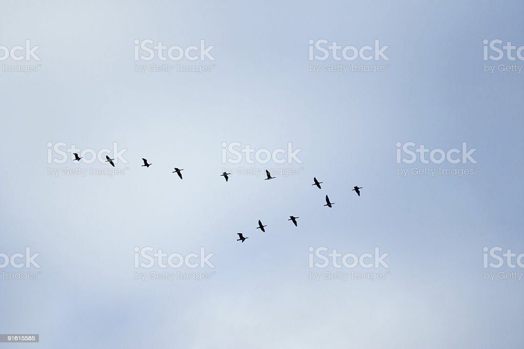 """birds in classic """"V"""" formation royalty-free stock photo"""