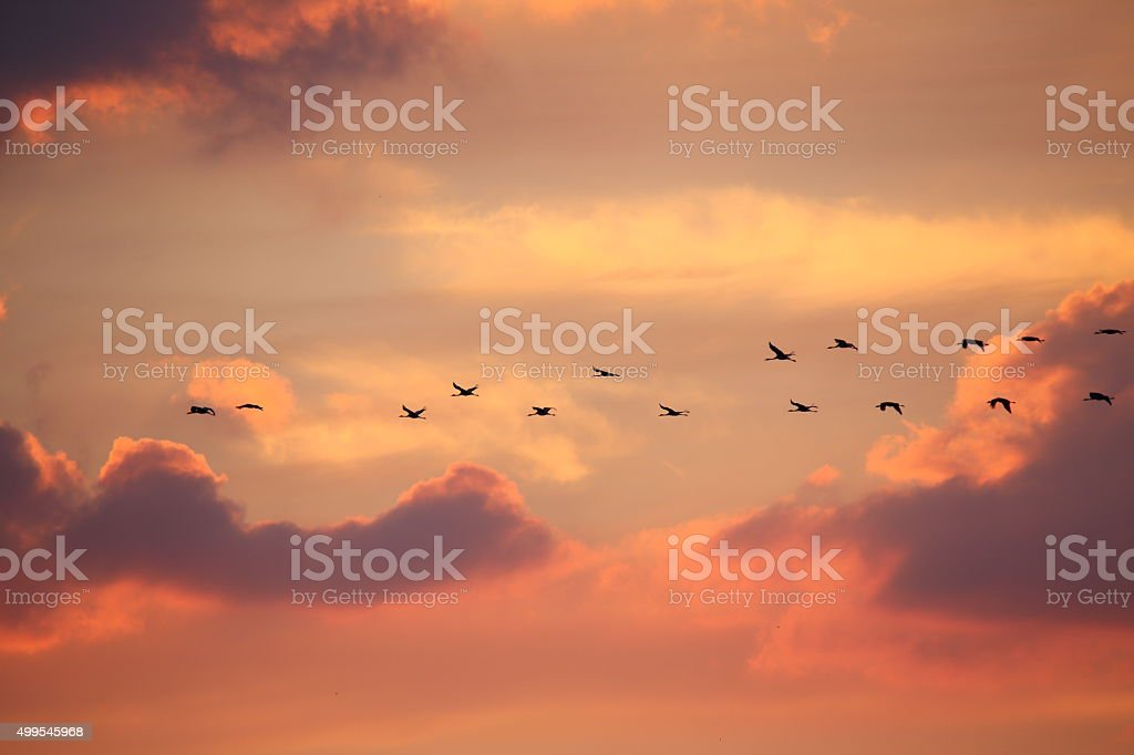 Birds in flight at sunset background stock photo