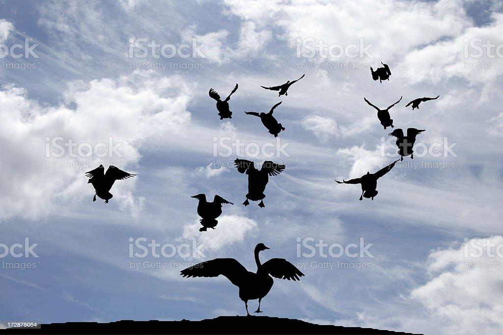 Birds in Flight royalty-free stock photo