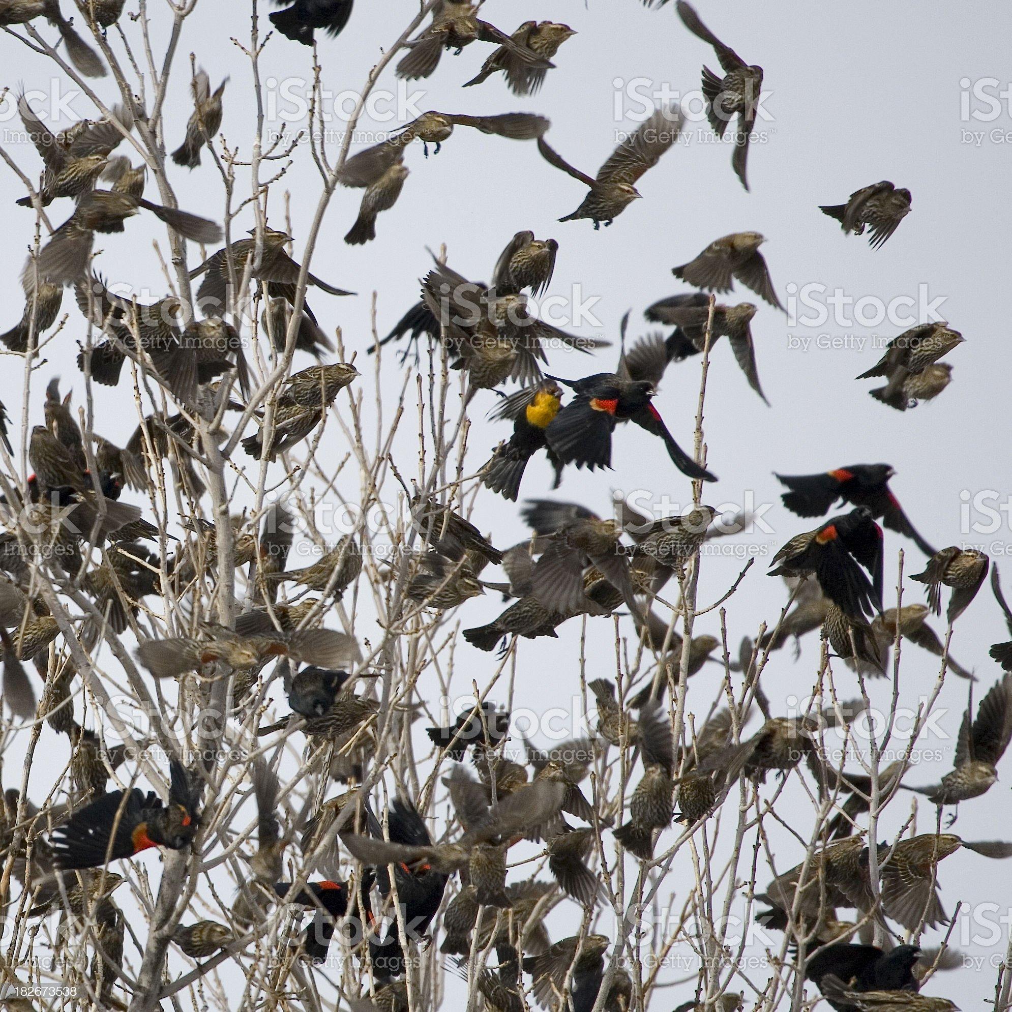 Birds in Flight. royalty-free stock photo