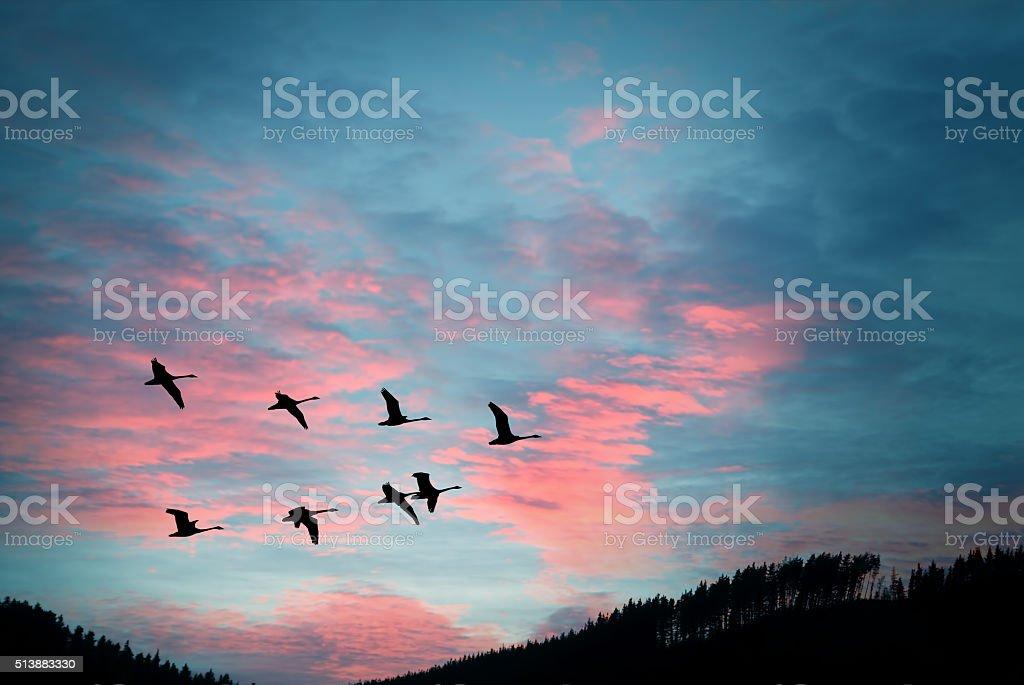 Birds in natural habitat stock photo