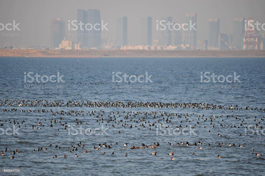 Birds in the city stock photo